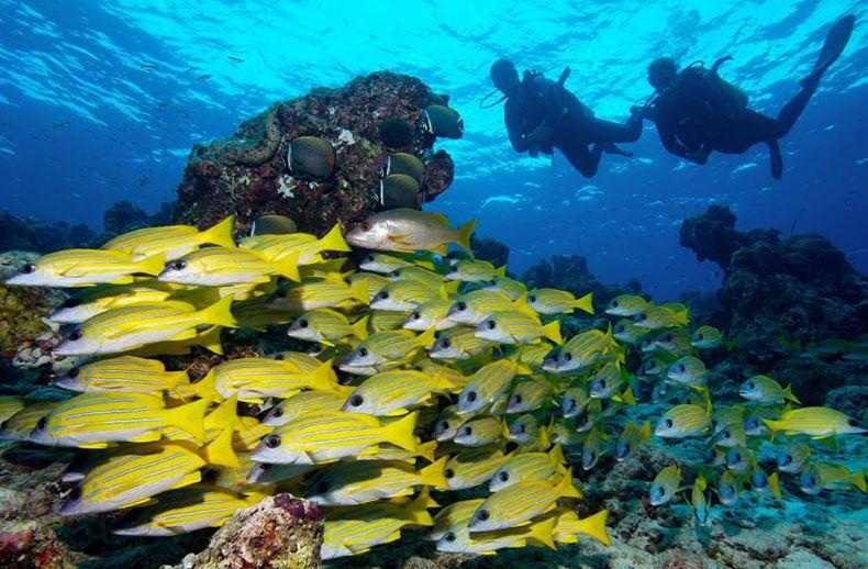 immersioni maldive